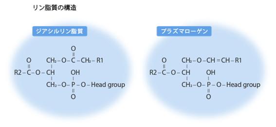 リン脂質の構造